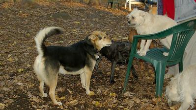 Jasper (pup), artimis, Maddie_001