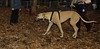 Eley (new, greyhound girl)_008