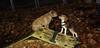 Arrow (new puppy), Jesse (new puppy)_001