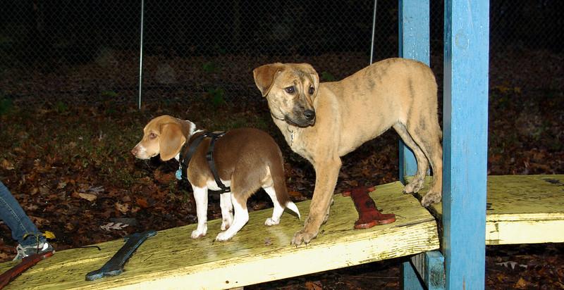 Arrow (new puppy), Jesse (new puppy)_002