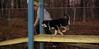 Trixie (new puppy 3 5m)_001