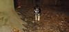 Trixie (new puppy 3 5m)_005