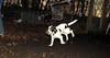 Jumbo (new pup boy)_002