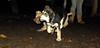 Sadie, trixie (new puppy)_005