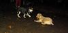Sadie, trixie (new puppy)_003