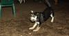 Trixie (new puppy)_006