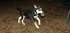 Trixie (new puppy)_010