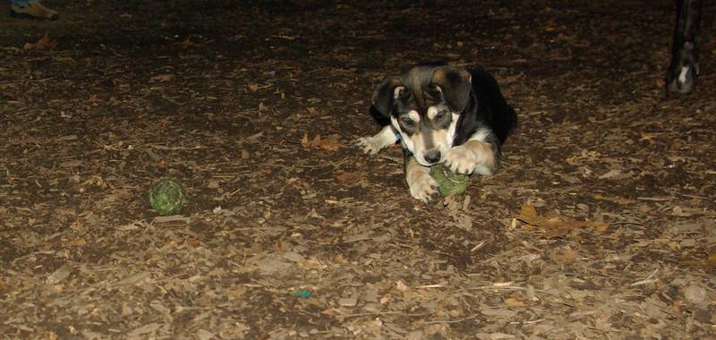 Trixie (new puppy)_009