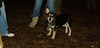Trixie (new puppy)_007