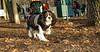 Charlie (shy beagle)_002