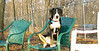 Maybelle (puppy girl)_001