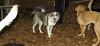 Deeno (new pup girl)_003