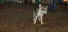 Deeno (new pup girl)_002