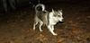 Deeno (new pup girl)_004