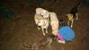 tara, baby, molly, maddie, tucker_001