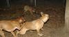 AAA New puppy girl_001