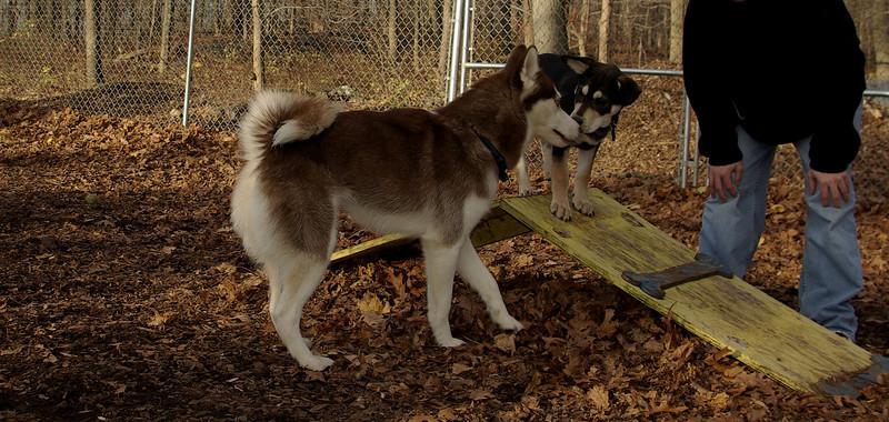 Nayna (new), Trixie (puppy)_001