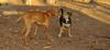 Jack (new), Cleo (pup)_002