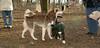 Nayna (new husky), Toby (puppy)_001