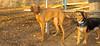 Jack (new), Cleo (pup)_001