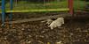 Boomer (new puppy boy)_005