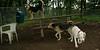 Boomer (pup), Max (pup), Maddie_001