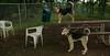 Boomer (pup), Maddie_001