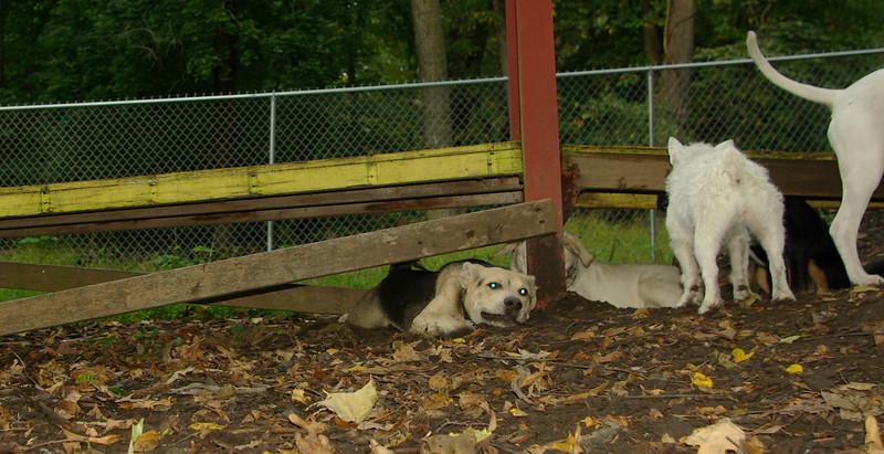 Boomer (new puppy boy)_003