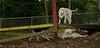 Boomer (puppy), Max (puppy)_005