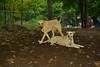 Ginger (puppy), Dixie (puppy)_004