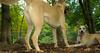 Ginger (puppy), Dixie (puppy)_002