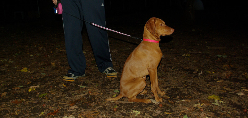 Cleo (viszla puppy)_001