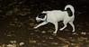 Bela (puppy)_001