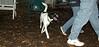 Bela (puppy)_002