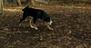 maybelle (puppy)_001