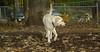 Leila (puppy , wendy)_001
