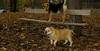 Brandy (bulldog, 11), Maddie_002
