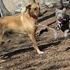 ahzja; pit; pup; girl; buffy