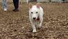Oscar (new pup)_00001