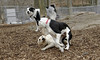 Jack (pup), Irena (pup), Marley_00002
