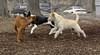 Roxy (pup), Jack, Whiskey_00003