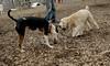 Hank (pup), Bud (bull terrier)_00005
