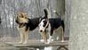Bud (bull terrier), Maddie_00002