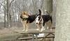 Bud (bull terrier), Maddie_00001