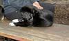 bruiser (rescue puppy)_00002