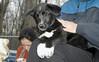 bruiser (rescue puppy)_00001