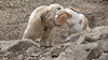 Lady (puppy), Hank (pup)_00002