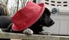 bruiser (red hat)_00001