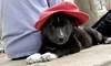 bruiser (red hat)_00002