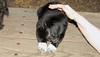 bruiser (rescue puppy)_00007